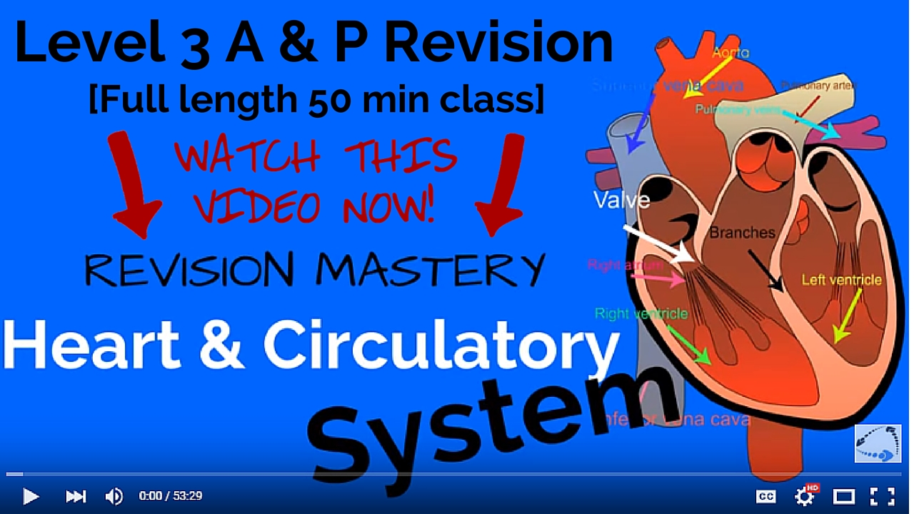 Level 3 Revision: The Heart and Circulatory System