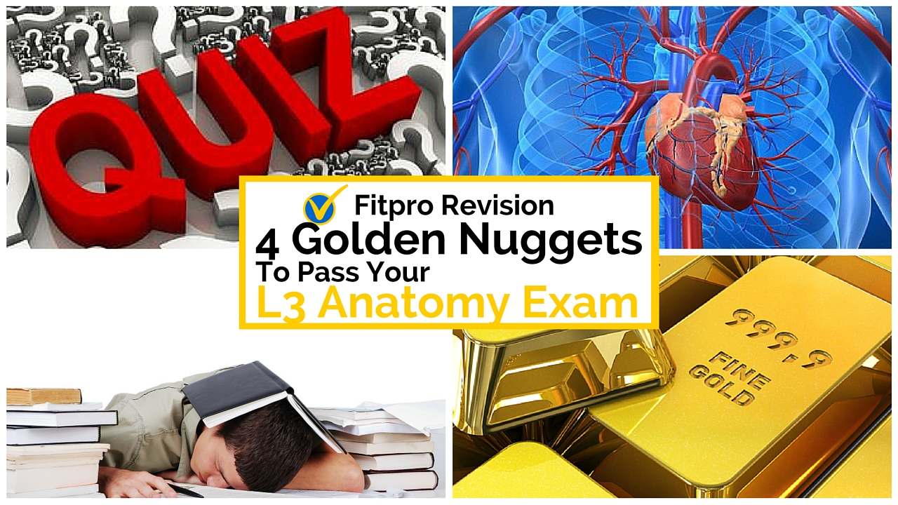4 Golden Nuggets to Pass Your Level 3 Anatomy Exam
