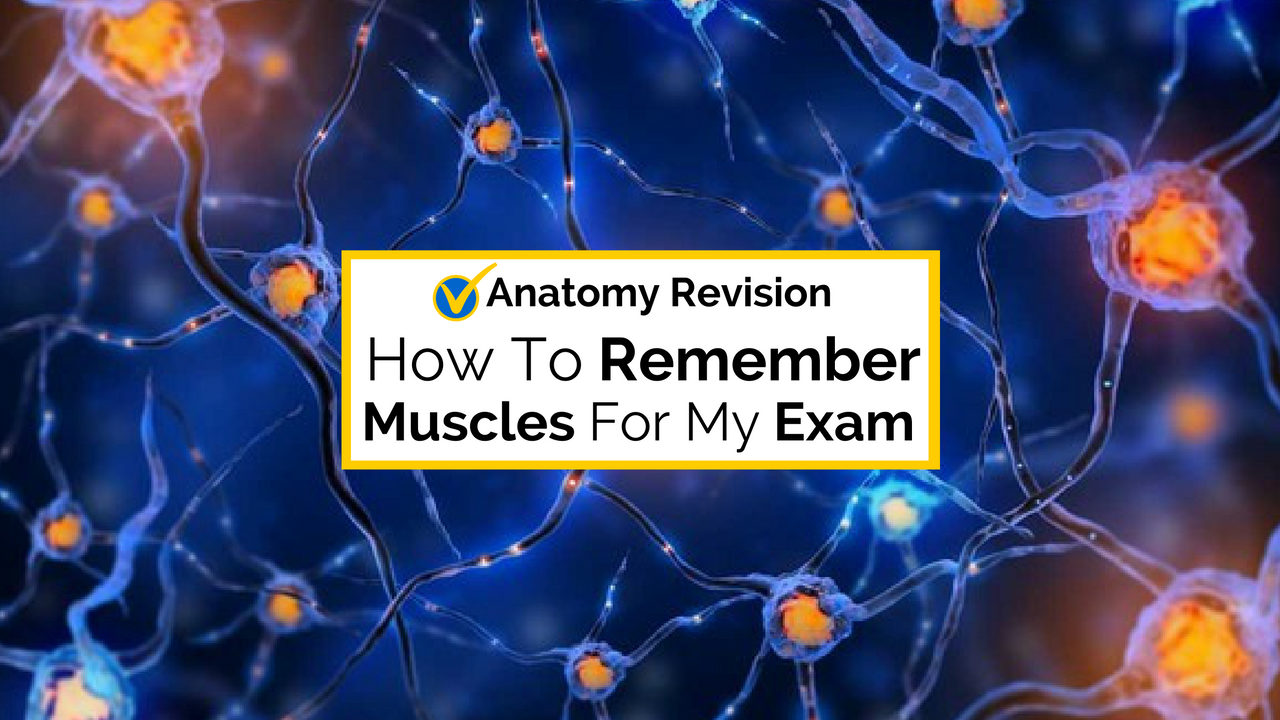 Using Visual Memory To Remember The Muscles