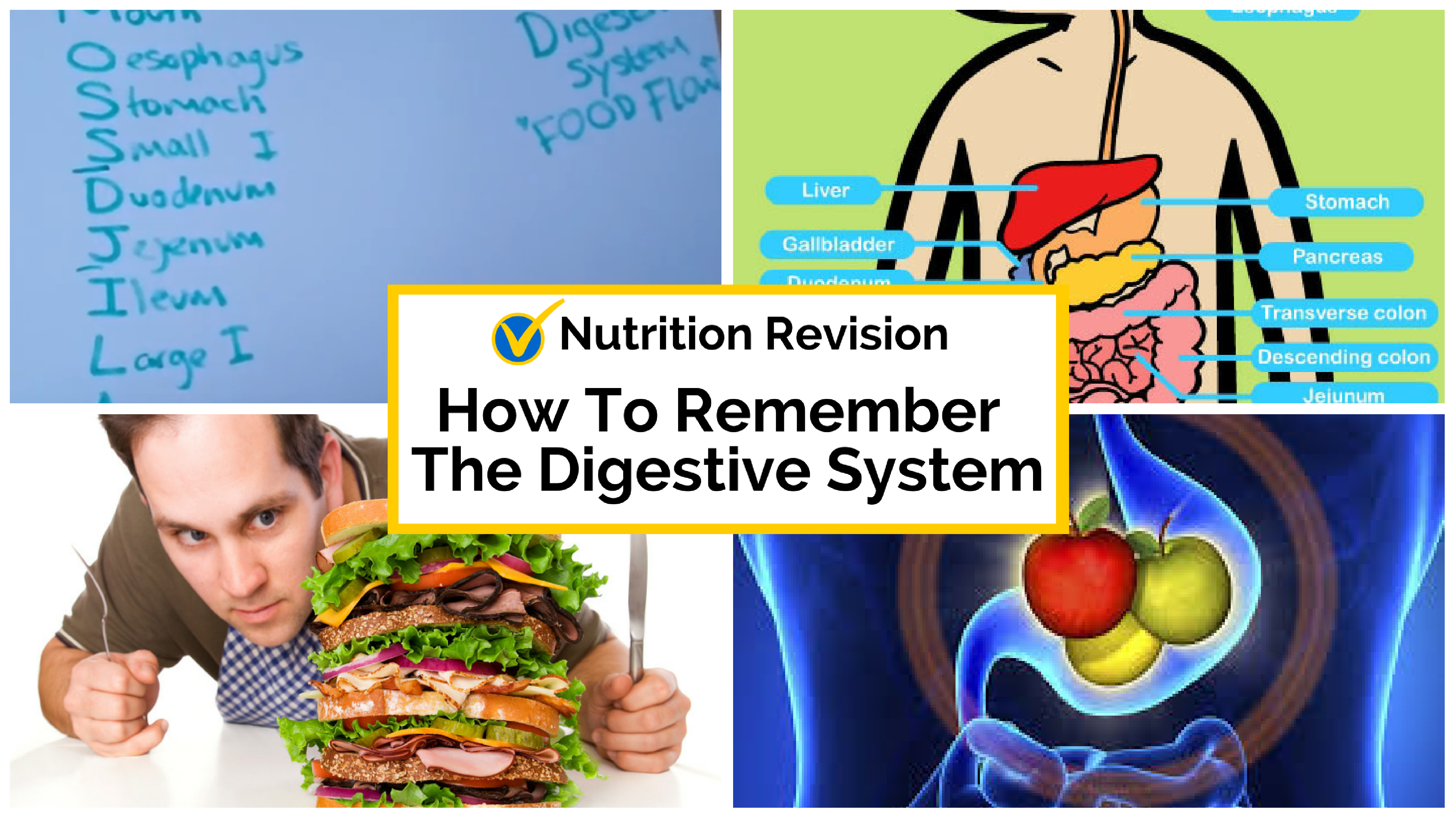 How To Remember the Digestive System