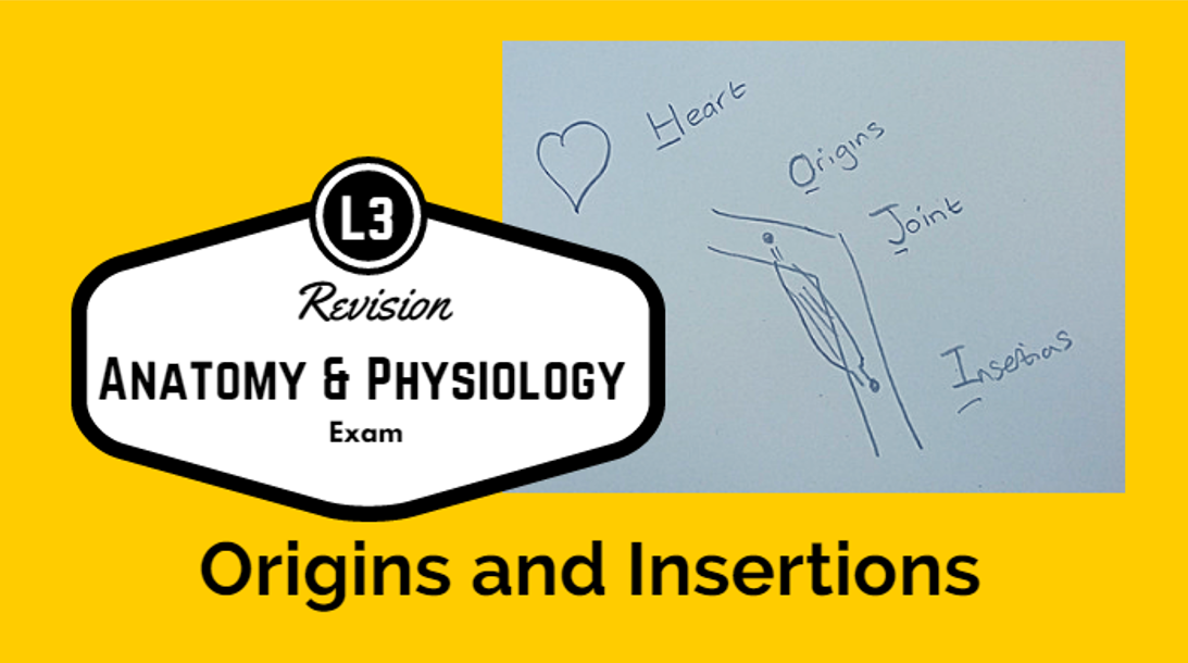How do I remember origins and insertions for my L3 Anatomy Exam?