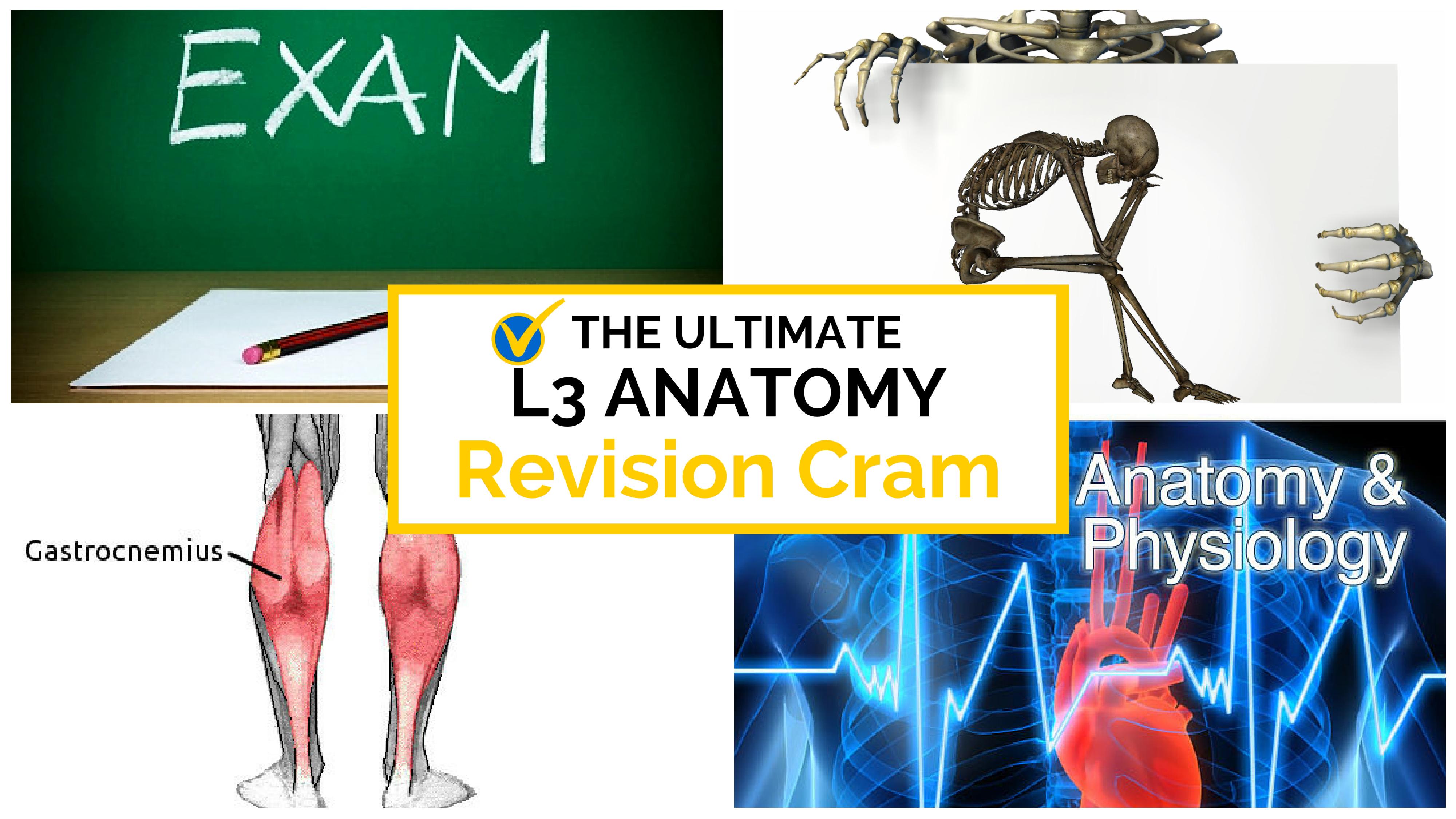 the ultimate l3 anatomy cram