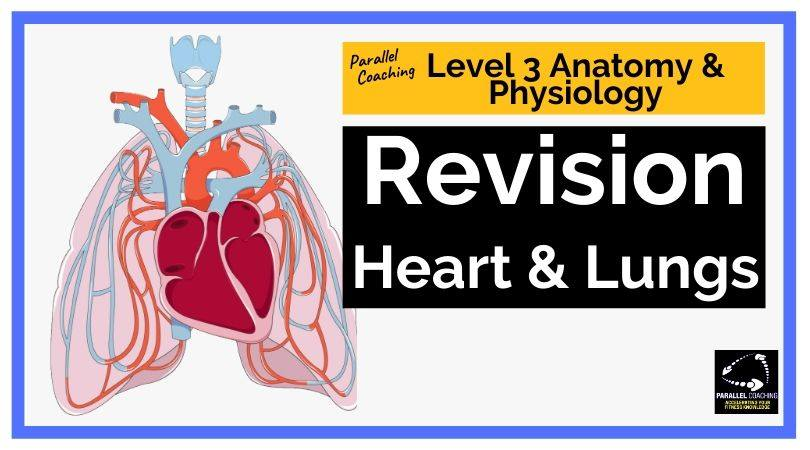 Level 3 anatomy and physiology revision heart and lungs