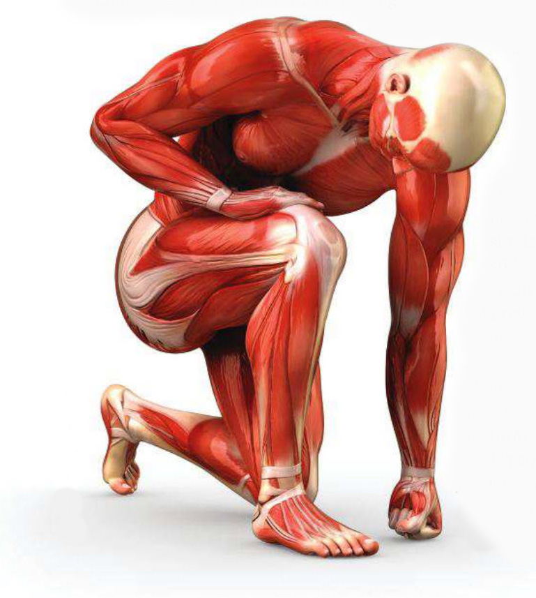 how-do-i-build-muscle-muscles (1) how to build muscle