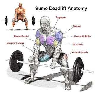 how-do-i-build-muscle-sumo-deadlift how to build muscle