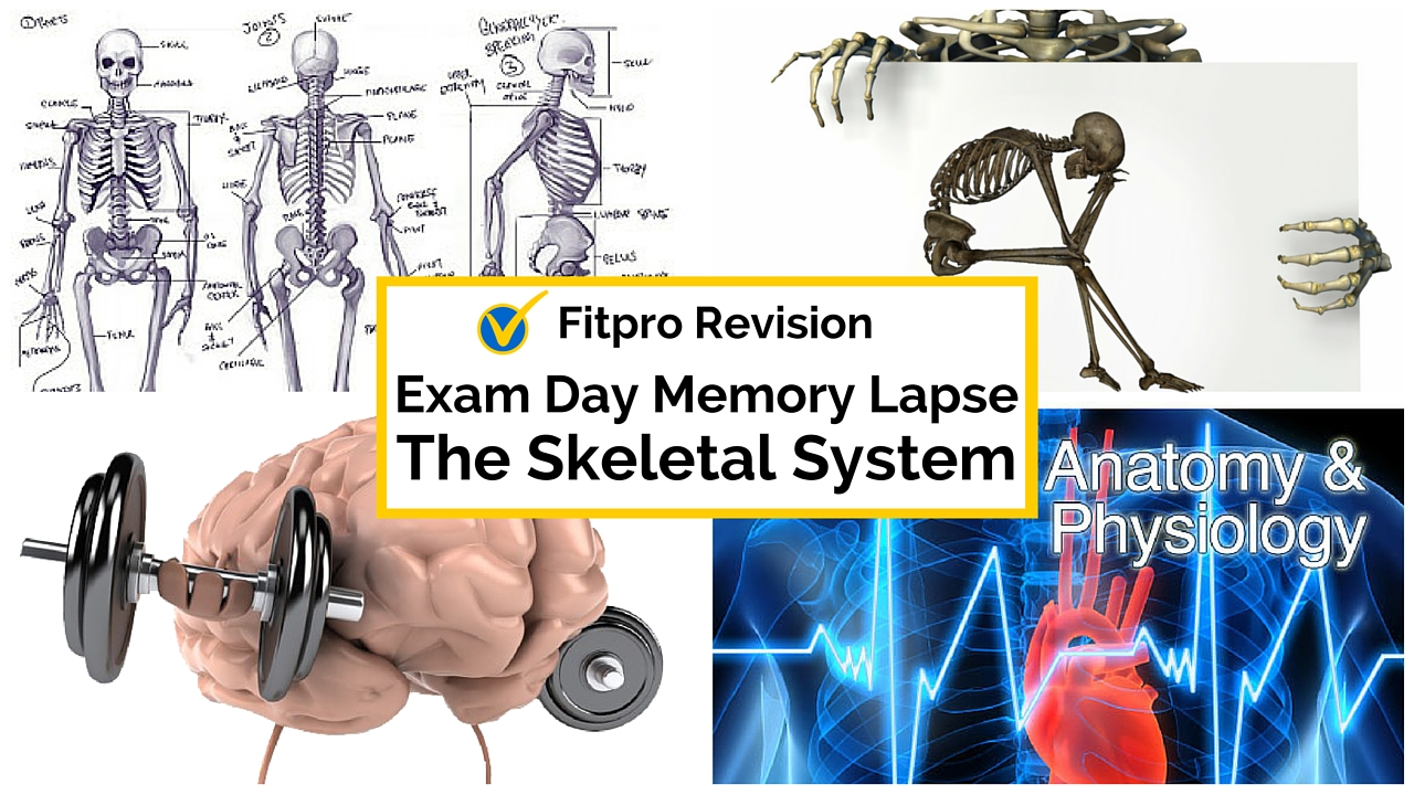 Exam Day Memory Lapse Cure - The Skeletal System?
