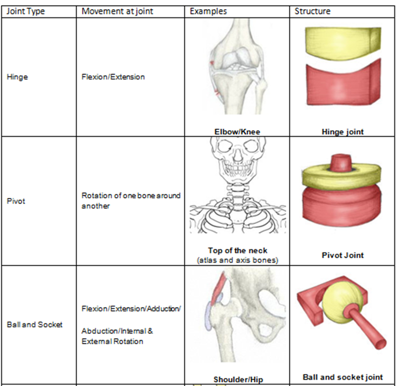 3 facts to ace your anatomy and physiology test joints for Table joints