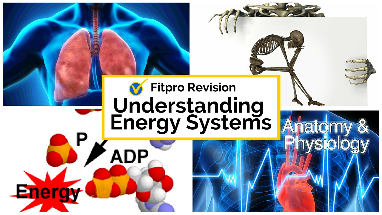 Anatomy and Physiology Test Revision - Energy Systems