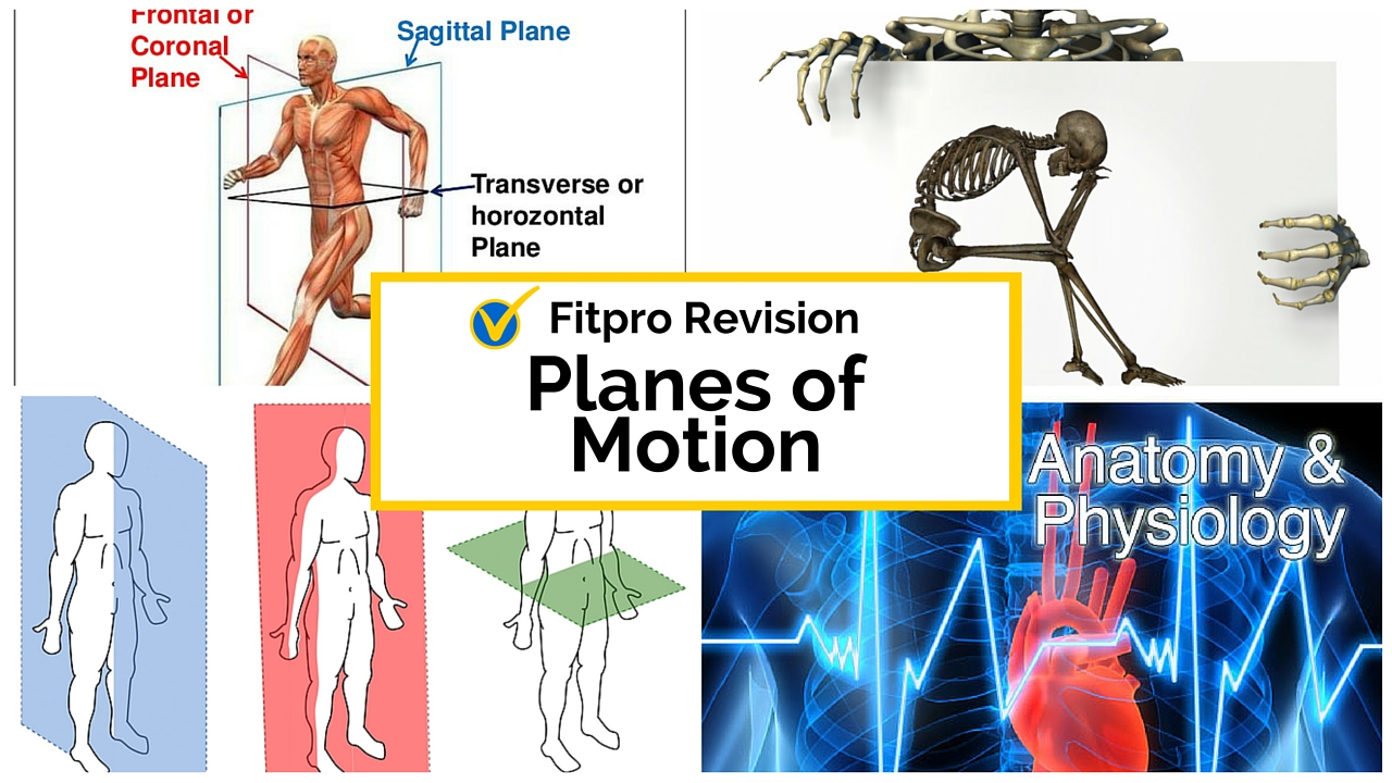 Anatomy and Physiology Study Guide – Planes of Motion