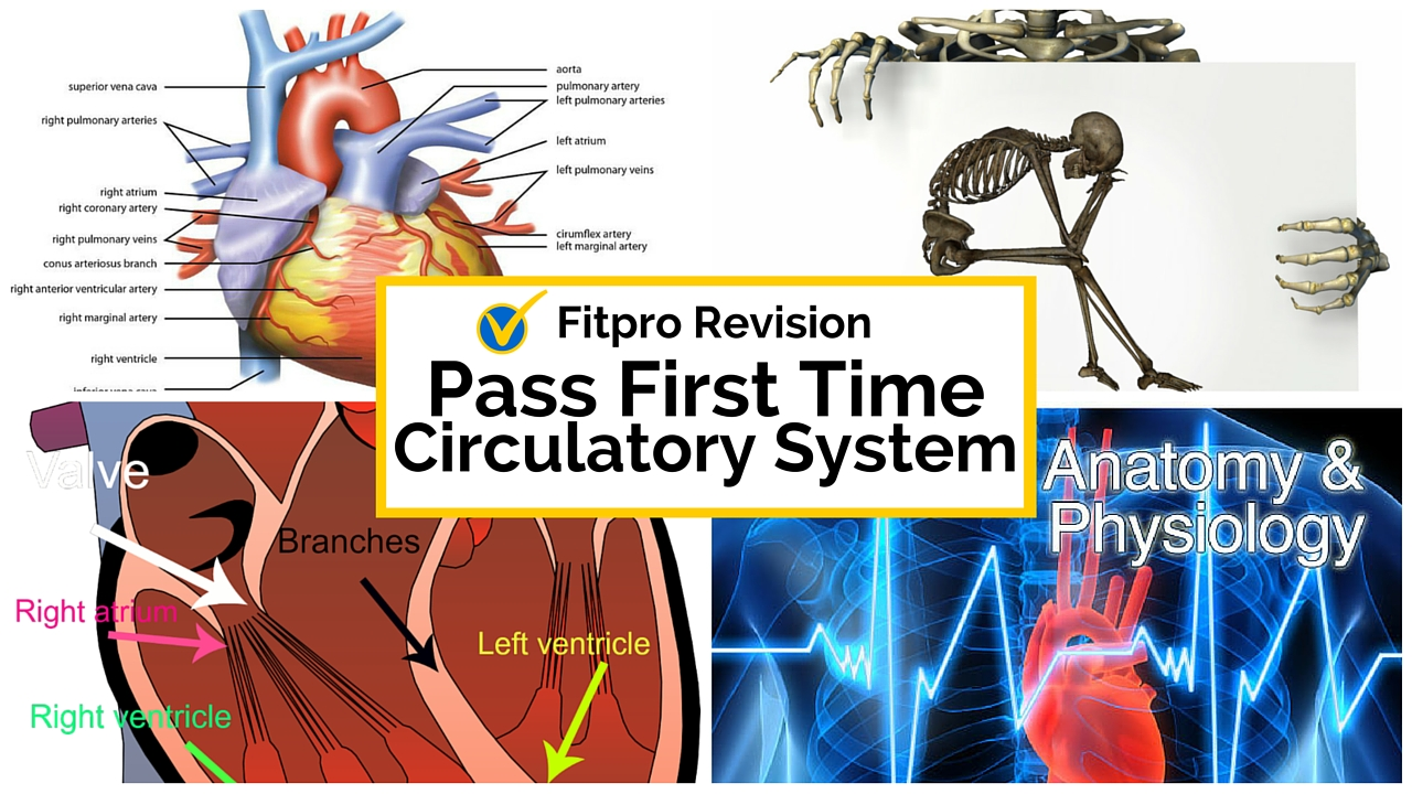 Pass Your Personal Trainer Exam First Time - Circulatory System