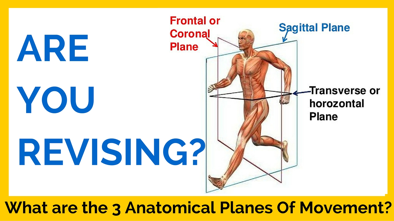 What Are The Three Anatomical Planes Of Movement