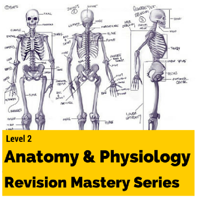 level 2 anatomy and physiology revision mastery series