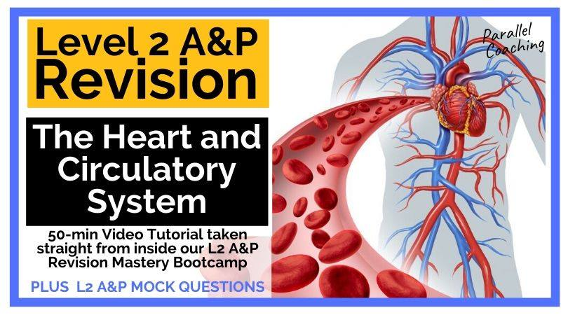 Level 2 Anatomy Revision The Heart and Circulatory System