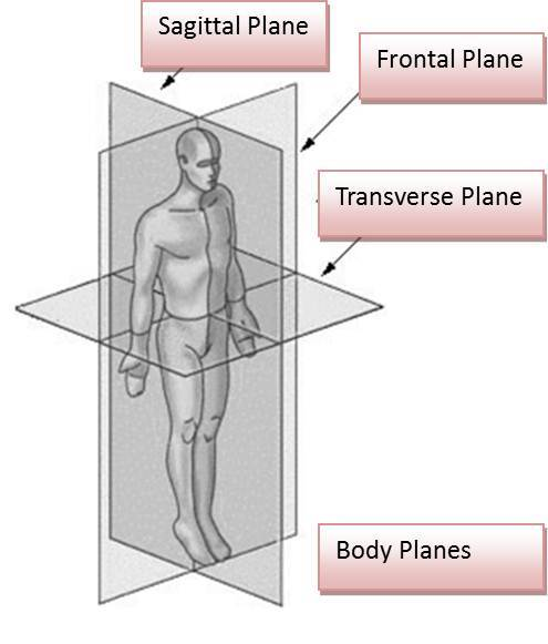 What are the three anatomical planes of movement?