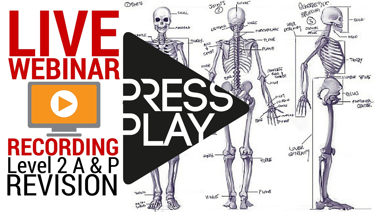 Level 2 Anatomy and Physiology Revision Archives - Parallel Coaching ...