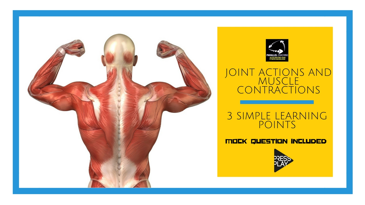 Joint Actions And Muscle Contractions In 3 Simple Learning Points