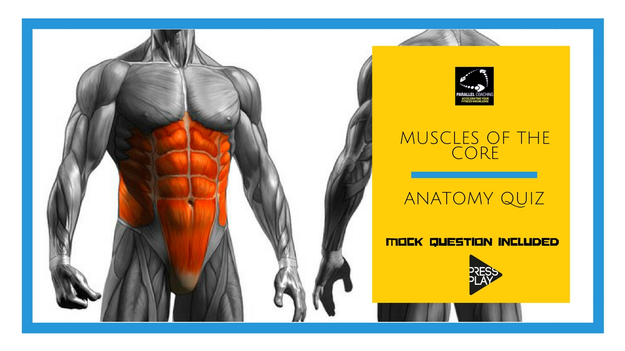 Muscles of the Core: Anatomy Quiz