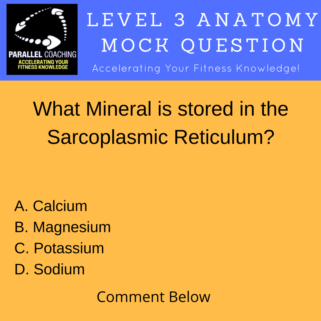 Mock Questions - What is a Sarcoplasmic Reticulum