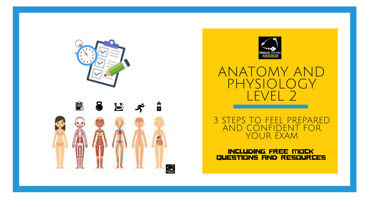 Anatomy and Physiology level 2 - 3 steps to feel prepared and confident for your exam
