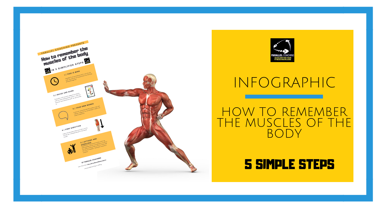 [Infographic] How to remember the muscles of the body in 5 steps