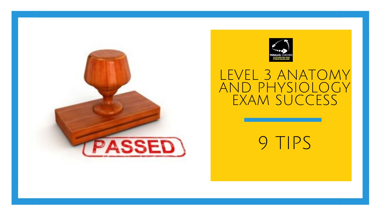 Level 3 anatomy and physiology exam success - 9 tips