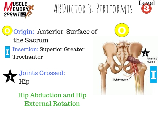 Does Your Client Have Tight Hips - The Piriformis Muscle