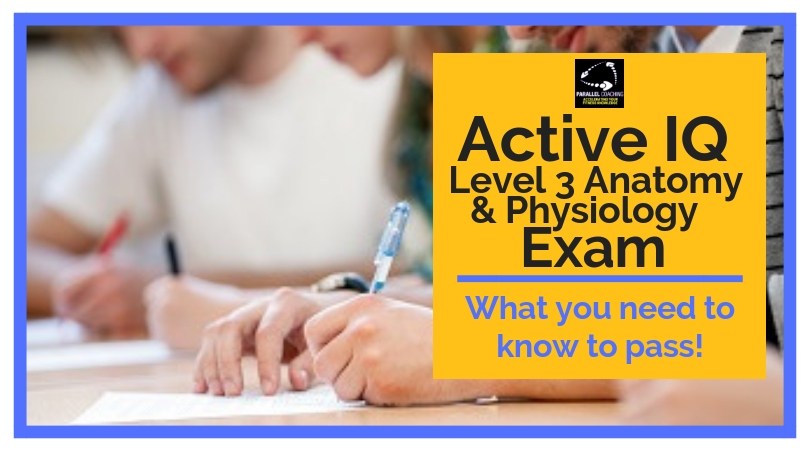 Active IQ Level 3 Anatomy and Physiology Exam: What you need to know