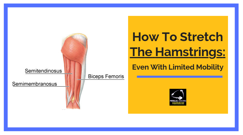 How to stretch the hamstrings even with limited mobility