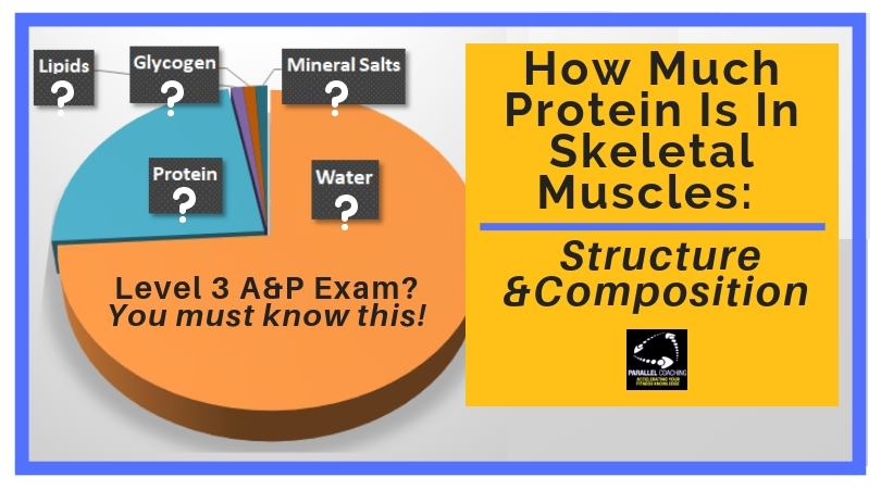 How Much Protein Is In Skeletal Muscles from Parallel Coaching