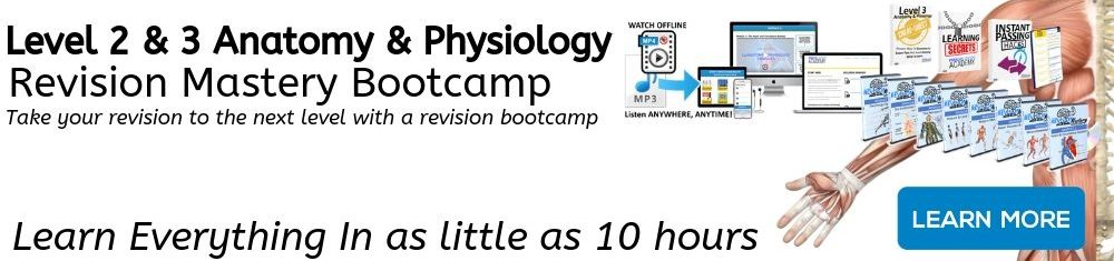 Anatomy and Physiology Revision Mastery Bootcamp - revision time