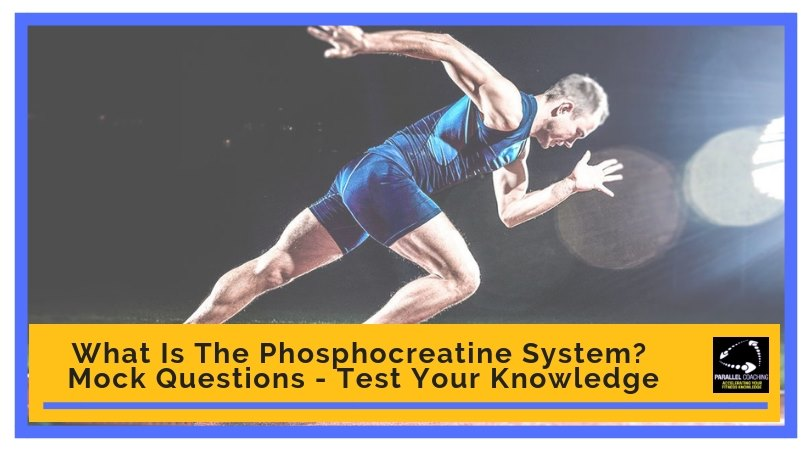 What is the Phosphocreatine System - Mock Questions
