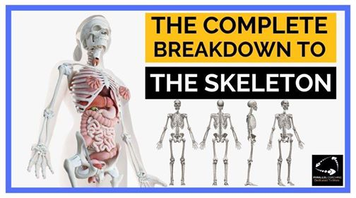 Level 2 Anatomy: The Complete Guide To The Skeleton